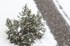 Дерево дорожки Стоковые Фотографии RF