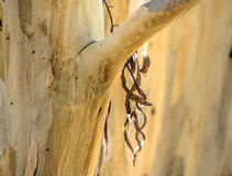 Дерево оружия Стоковая Фотография