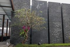 Дерево орхидеи Стоковое Изображение