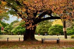 Дерево осени выходит ландшафт сада Токио стоковые изображения