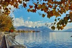 Дерево осени в обваловке городка Vevey и женевского озера, Швейцарии Стоковая Фотография