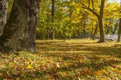 Дерево осени в парке Стоковое фото RF