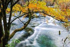 Дерево осени и пропуская заводь Стоковая Фотография RF