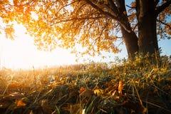 Дерево осени на луге Стоковое Фото