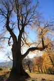Дерево осени, при солнце пряча позади Стоковая Фотография