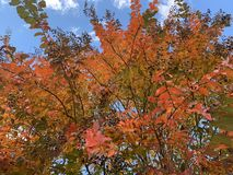 Дерево осени стоковое фото rf