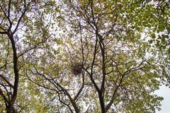Дерево осени с гнездом Стоковое Изображение RF