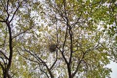 Дерево осени с гнездом Стоковое Изображение