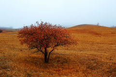 Дерево осени с красными листьями Стоковая Фотография