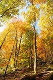 Дерево осени с утесом Стоковые Изображения