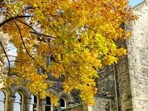 Дерево 2016 осени центра Gerstein университета Торонто Стоковая Фотография