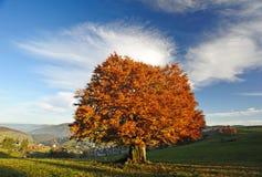 Дерево осени Стоковые Фото
