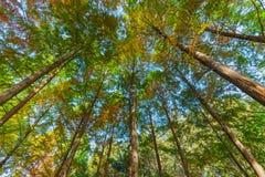 Дерево осень стоковая фотография rf