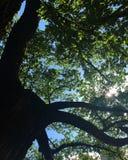 Дерево оставшийся в живых Стоковое Фото