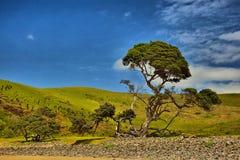 Дерево - отверстие в стене Стоковое Изображение RF