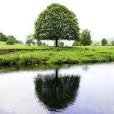 Дерево отраженное в реке Hodder Стоковая Фотография RF