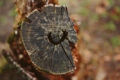 Дерево отрезанное вниз Стоковое Изображение RF