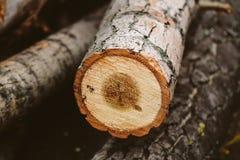 Дерево отрезанное вниз Стоковые Фотографии RF