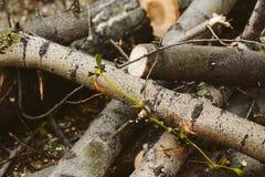 Дерево отрезанное вниз Стоковое Фото