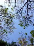 Дерево от нижнего взгляда, природы предпосылки Стоковые Изображения