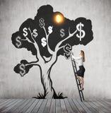 Дерево доллара женщины взбираясь Стоковое фото RF