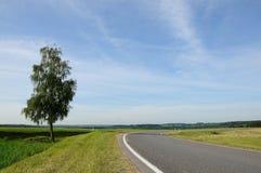 Дерево о дороге на фоне голубого неба Стоковые Изображения RF