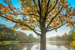 дерево падения около воды стоковое фото