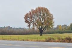 Дерево падения с шикарной предпосылкой Стоковое фото RF