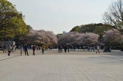 Дерево парка и Сакуры Ueno весной с людьми Стоковая Фотография RF