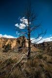 Дерево парка штата утеса Смита Стоковое Изображение
