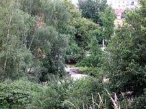 Дерево парка Стоковое Фото