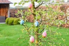 Дерево пасхи с синью и пинком украсило яичка Стоковое Изображение RF