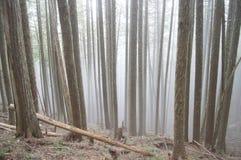 Дерево падает Стоковые Фото