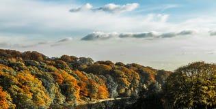 Дерево падения осени ландшафта золотое стоковое фото