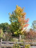 Дерево падения Стоковое фото RF