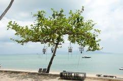 Дерево перед пляжем Стоковые Изображения