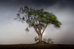 Дерево перед штормом Стоковые Изображения