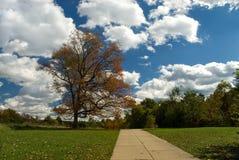 Дерево пикника стоковое фото