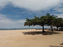 дерево пляжа sanur стоковое изображение rf