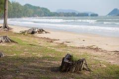 Дерево пня на море Листья в воде Стоковое Изображение RF