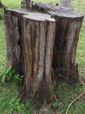 Дерево пня на пляже Стоковые Фотографии RF