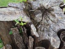 Дерево пня на пляже Стоковое Изображение
