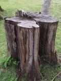 Дерево пня на пляже Стоковое Изображение RF