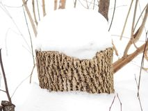 Дерево пня под снегом Стоковое Изображение