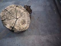 Дерево пня topview Стоковая Фотография