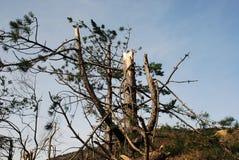 Дерево поврежденное гололедью около Canebola 1 Стоковые Фотографии RF