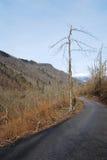 Дерево поврежденное гололедью около Canebola Стоковые Фотографии RF