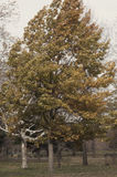 Дерево пока ветер дует Стоковые Изображения
