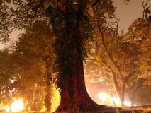 Дерево покрашенное светом на ноче 2 Стоковые Фото