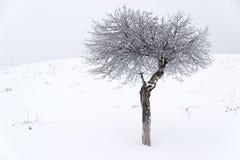 Дерево покрытое с снегом в поле зимы Стоковое Изображение